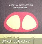 Model Bave (716 x 754) (358 x 377).jpg - 30kB